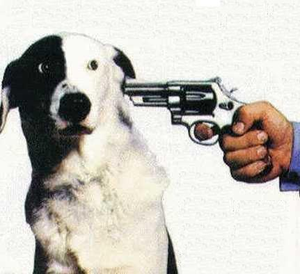 Exekution eines Kampfhundes