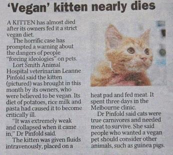 Veganer Wahnsinn